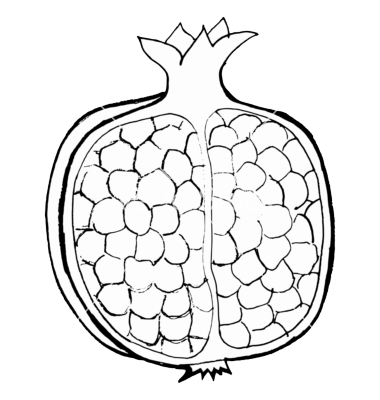 Hand drawn, vector, cartoon illustration of pomegranate